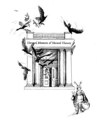 Harvard entry Illust.
