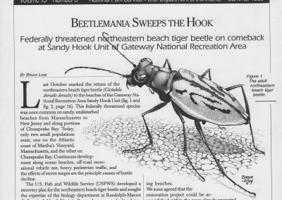 NOrthern tiger beetle cover