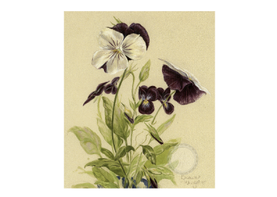 Pansy painting copy