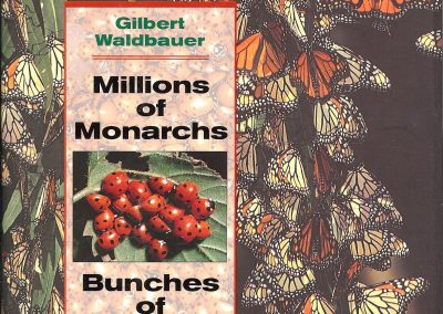 millions of monarchs cover 001
