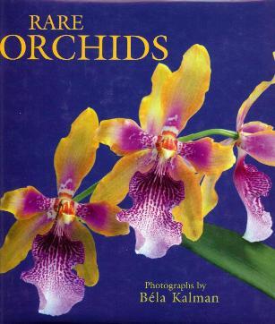 orchids bella kalman 001