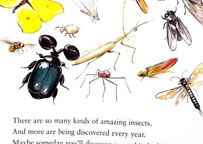 pg 16 insects